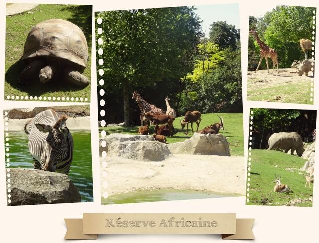 beauval réserve africaine (page 2) (640x489)