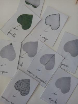 carte nomenclature montessori feuille arbre