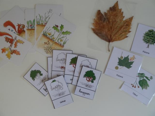 montessori carte nomenclature arbre biologie