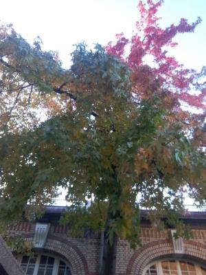 montessori arbre