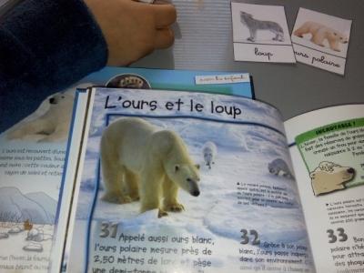 livres enfant pôles et animaux