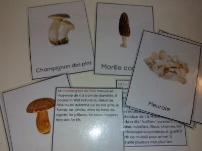 montessori carte nomenclature champignon