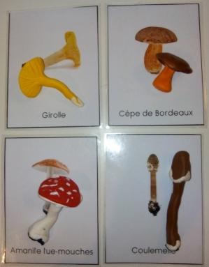 activite enfant sciences vie et terre champignon