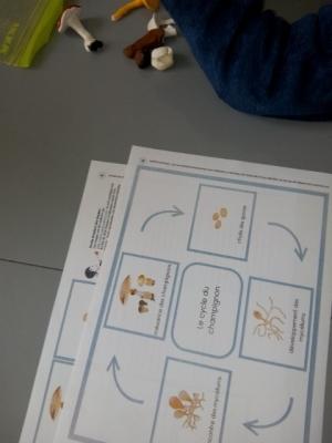 cycle champignon activite enfant