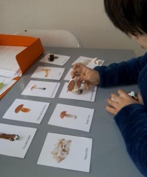 activite enfant sur les champignons