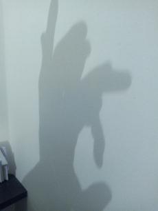 ombres chinoises activite enfant