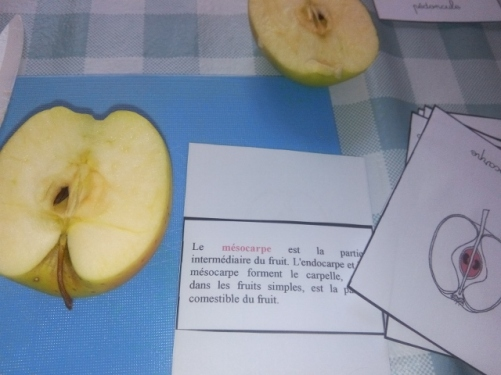 montessori la pomme fruit carte nomenclature