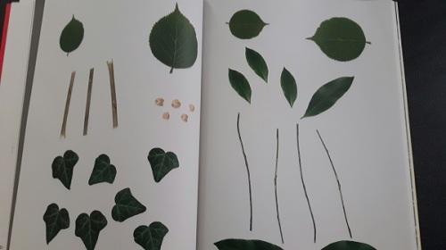livre-activite-nature-enfant-balthazar-montessori