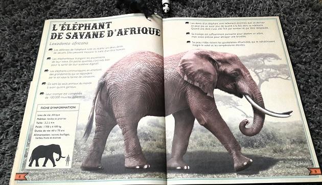 livre-enfant-animaux
